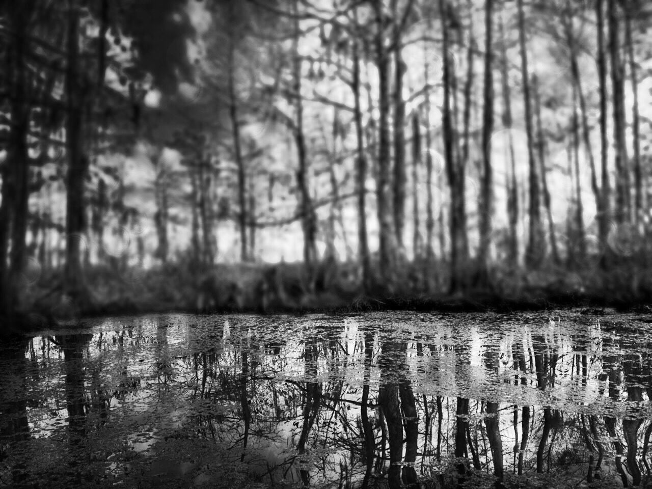 Reflection Trees Water Forest The Great Outdoors - 2017 EyeEm Awards Lake Close-up EyeEmBestPics EyeEm Best Shots Shootermag Exceptional Photographs EyeEm Gallery Eyem Collection Pupolar Photos A Week On Eyeem Eye4photography  EyeEm Nature Lover Water Reflections Light And Shadow Shades Of Nature Beauty Is Everywhere