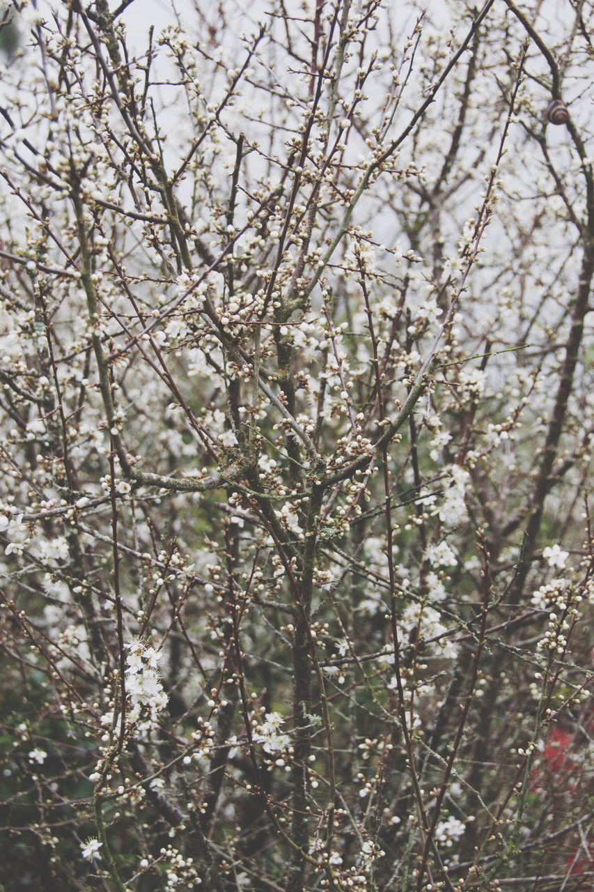 tree, nature, branch, growth, beauty in nature, no people, flower, fragility, day, outdoors, freshness, backgrounds, close-up