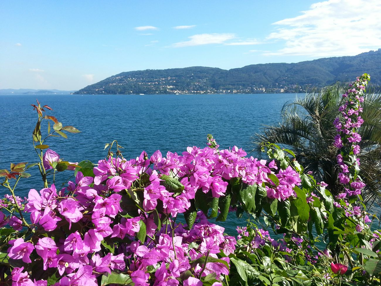 Fleurs Flowers Paysage View Borromeo italy Italie Lac Majeur Major Lac Italie