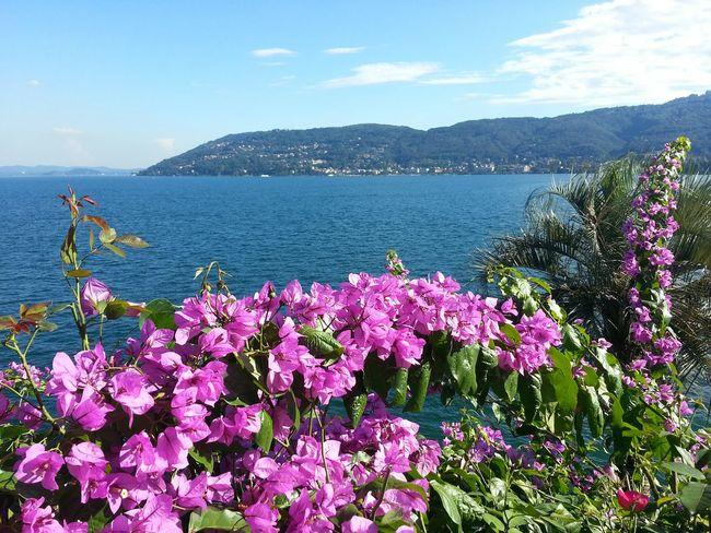 Fleurs Flowers Paysage View Borromeo italy Italie Lac Majeur Major Lac Italie