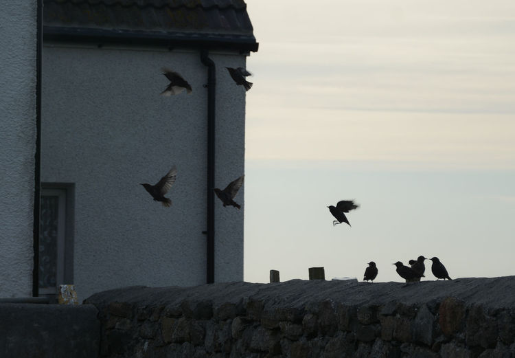 Animal Themes Bird Capturing Motion Flying Kilbride Outdoors Outer Hebrides South Uist Travel Photography Traveling