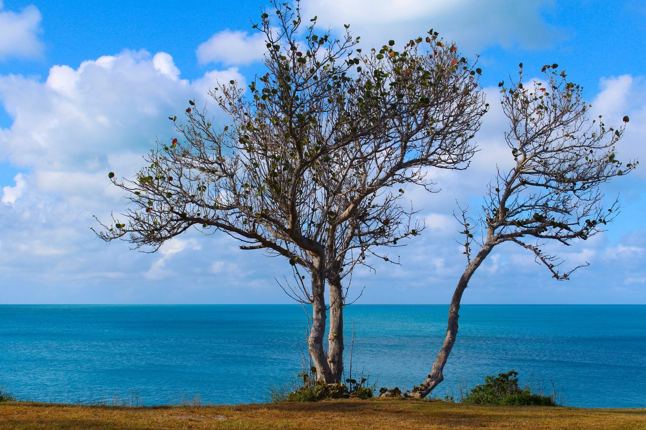 sky, sea, horizon over water, tranquility, tree, nature, beauty in nature, tranquil scene, scenics, lone, cloud - sky, water, day, outdoors, branch, blue, landscape, bare tree, no people
