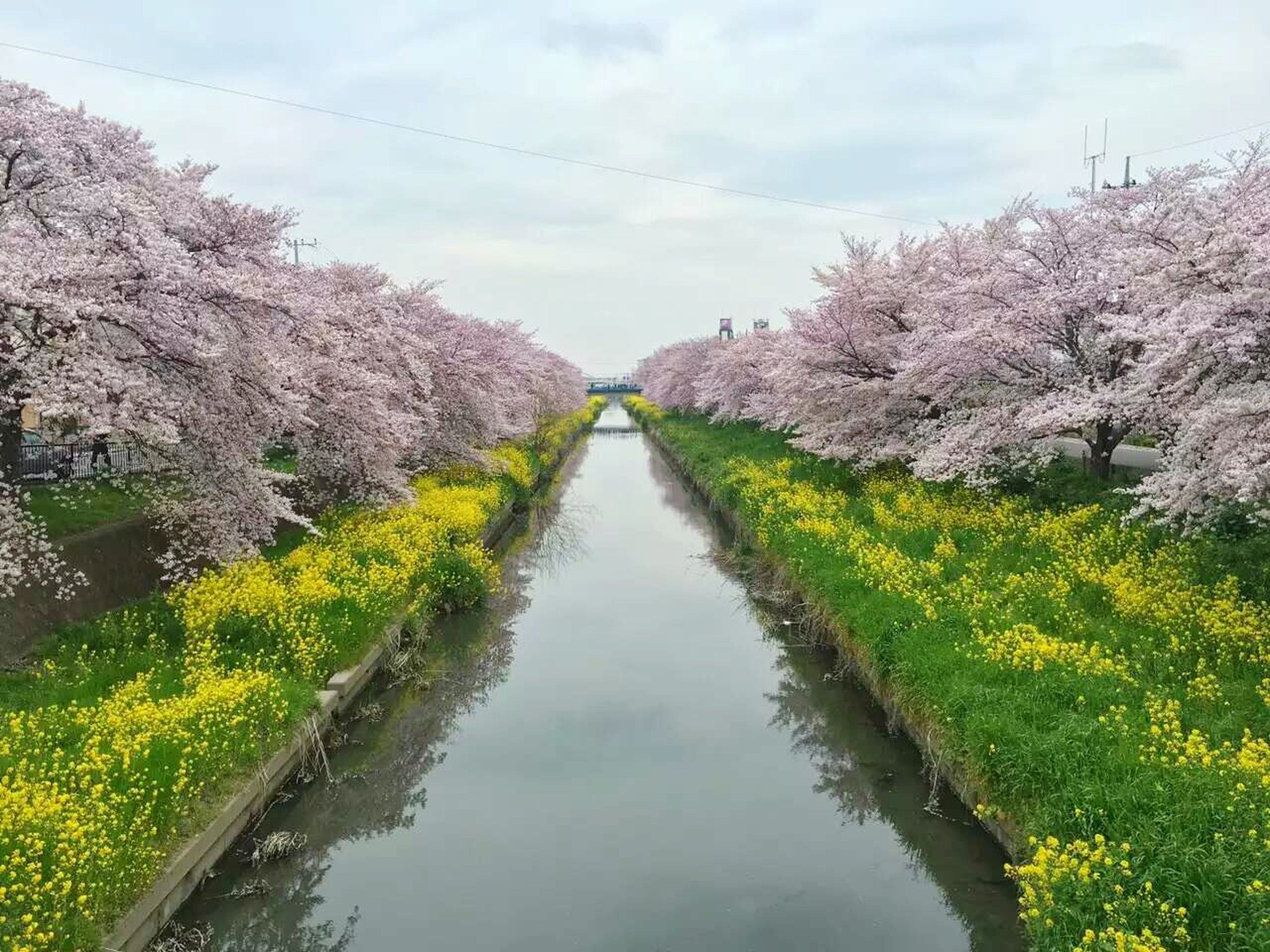 tree, tranquility, tranquil scene, sky, growth, beauty in nature, nature, water, scenics, diminishing perspective, the way forward, plant, flower, landscape, day, green color, stream, river, vanishing point, cloud - sky