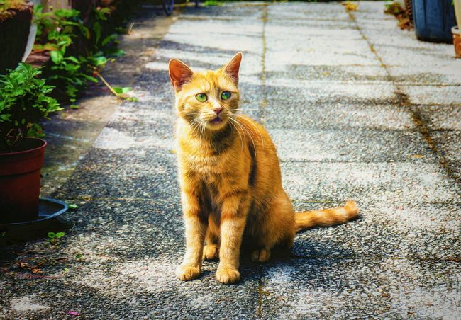 Little Cat Pet Cute Kitty Cats Kitten Pet Photography  Cute Pets Red Cats Colors Of Life