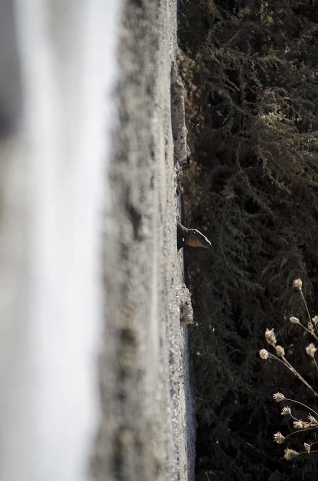A Bird's Eye View Hole Lagartija Lagarto Lizard Muro  Piedras Stone Wall