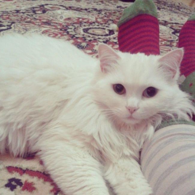 Yoruldukbugün Kedicigimle Maya Mayukhan kedi cat