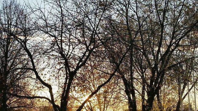 Sonnenaufgang Nature sunlight