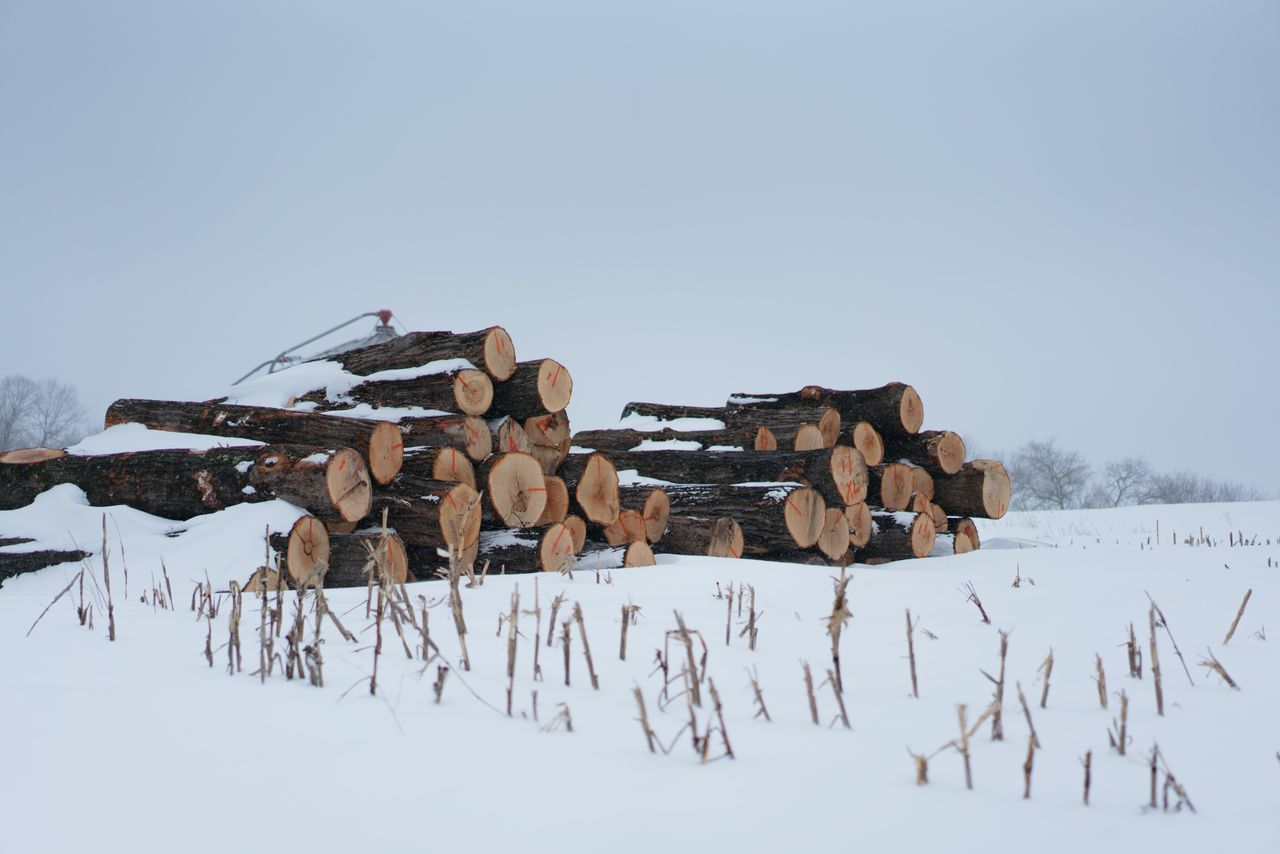 Stack Log Woodpile Timber Heap Winter Snow Large Group Of Objects Cold Temperature No People Forestry Industry Day Outdoors
