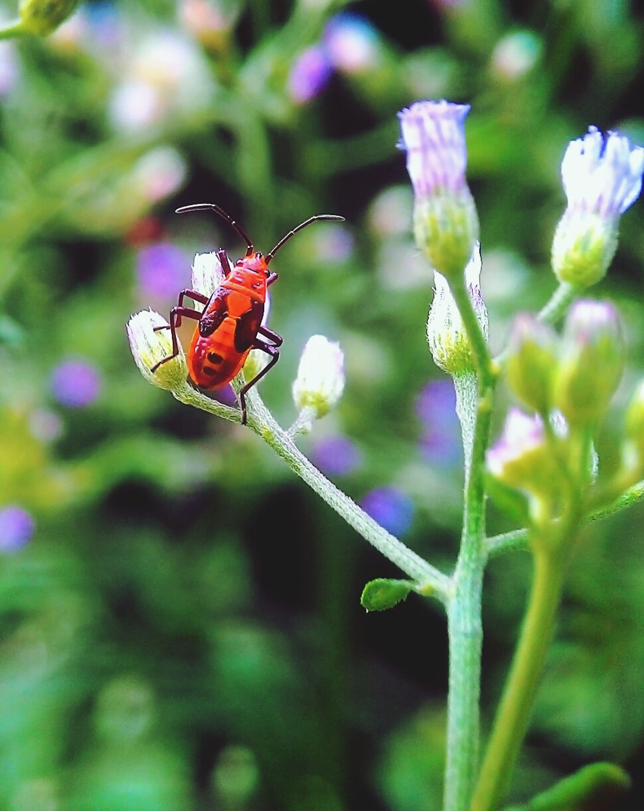 Red bug Insect Flower Nature Beauty In Nature One Animal Animal Themes Fragility Close-up Animals In The Wild Plant Outdoors Day Butterfly - Insect Animal Wildlife Green Color No People Freshness Pollination Hovering Macrophotography Macro Clique Macroworld Macro Beauty Macro_captures
