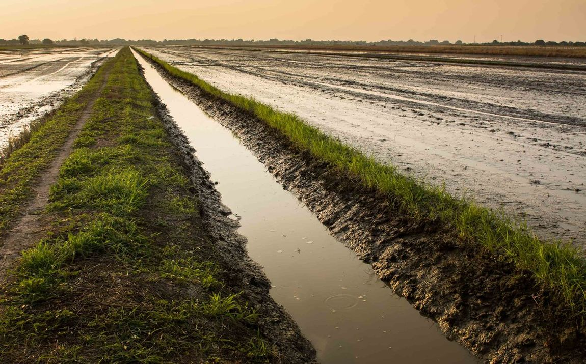 the well prepared of rice field and ready to grow the seed Agriculture Canal Dirt Road Field Grass Growth Landscape Mud Nature Rice Field Rural Scene Scenics Stream Water Water Way