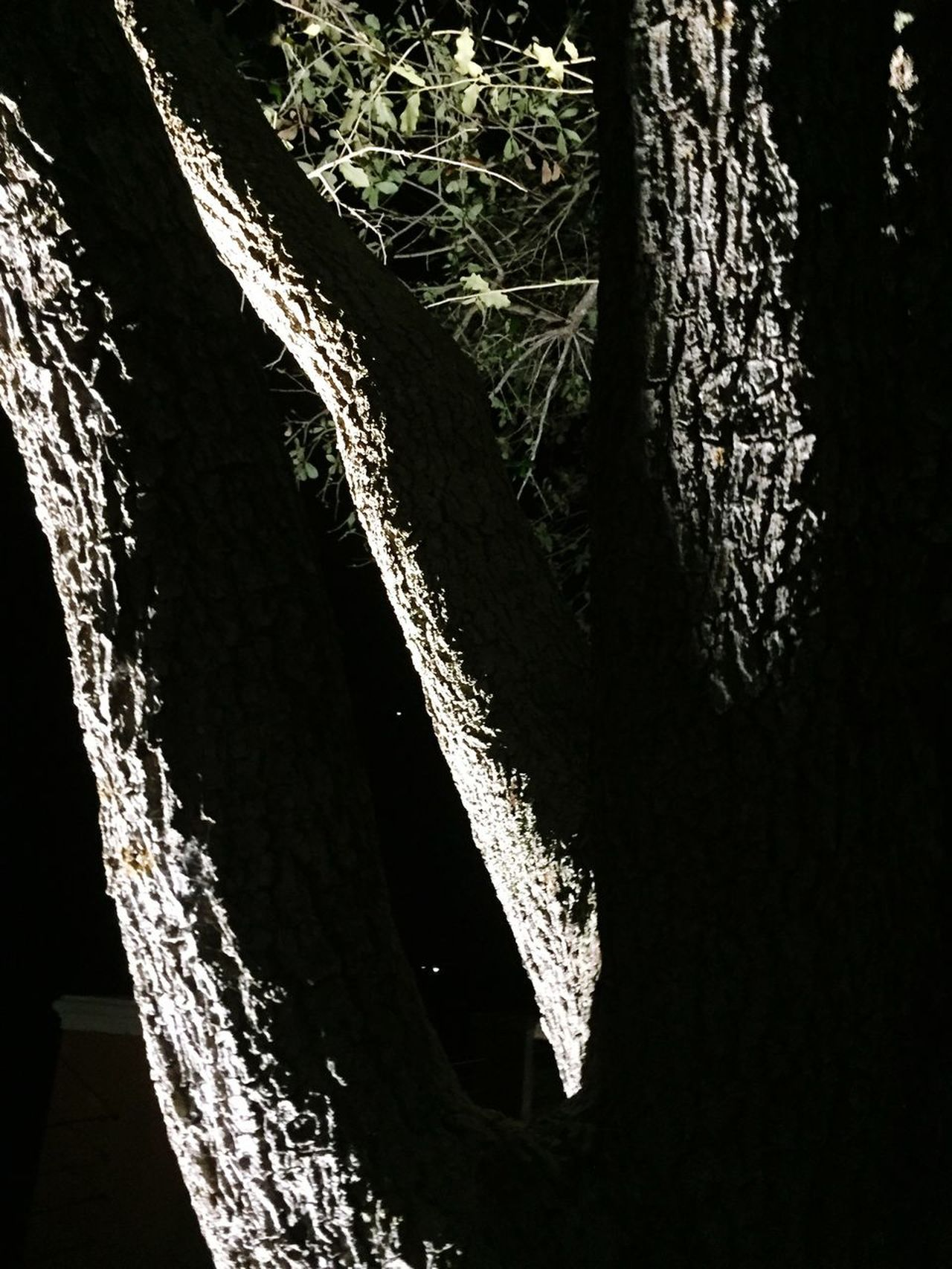 Shadows & Lights Tree Black Weston Outdoors No People Close-up Nature Day Tree Ray Of Light Florida Bright Art Is Everywhere Nature Beauty In Nature Calm EyeEmNewHere
