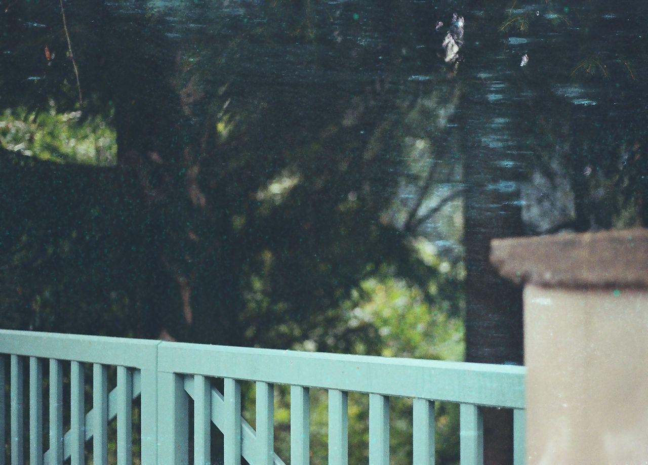 35mm Autumn Branch Canon AE-1 Filmisnotdead Green Ishootfilm Liberec Outdoors Tree
