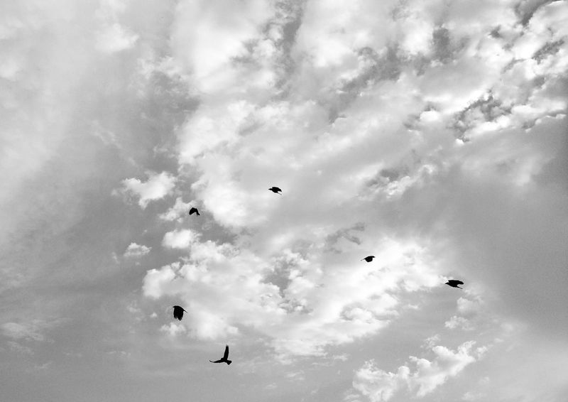 Birds_collection Silhouette Silhouette_collection Black & White Streetphoto_bw Flock Of Birds Cloud_collection  EyeEm Best Shots - Black + White EyeEm Best Shots