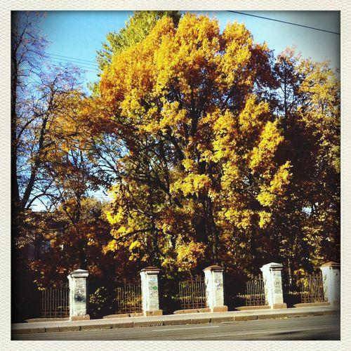 Autumn, 2013
