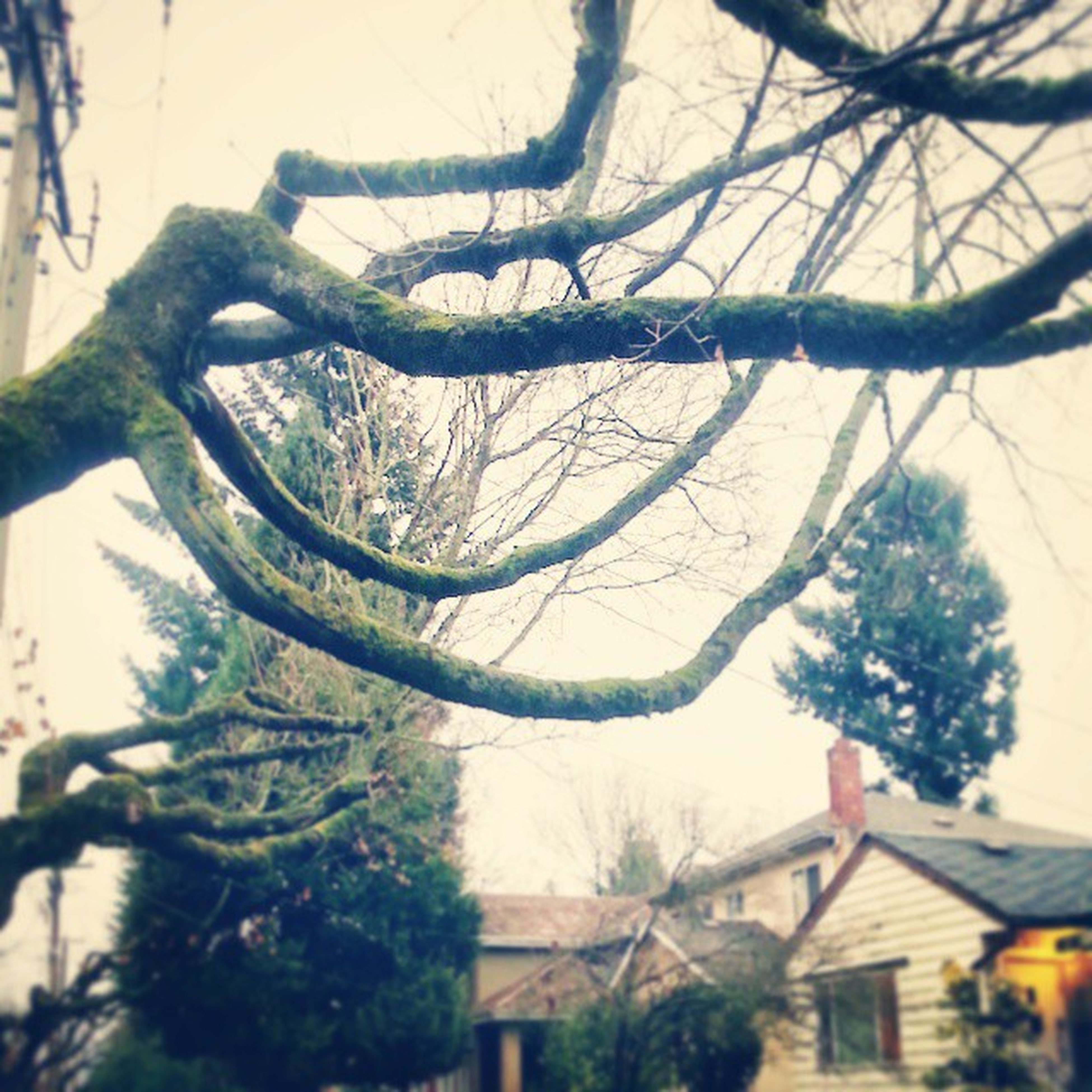 tree, branch, building exterior, architecture, bare tree, built structure, tree trunk, house, low angle view, growth, day, residential structure, sky, nature, outdoors, residential building, no people, roof, building, city