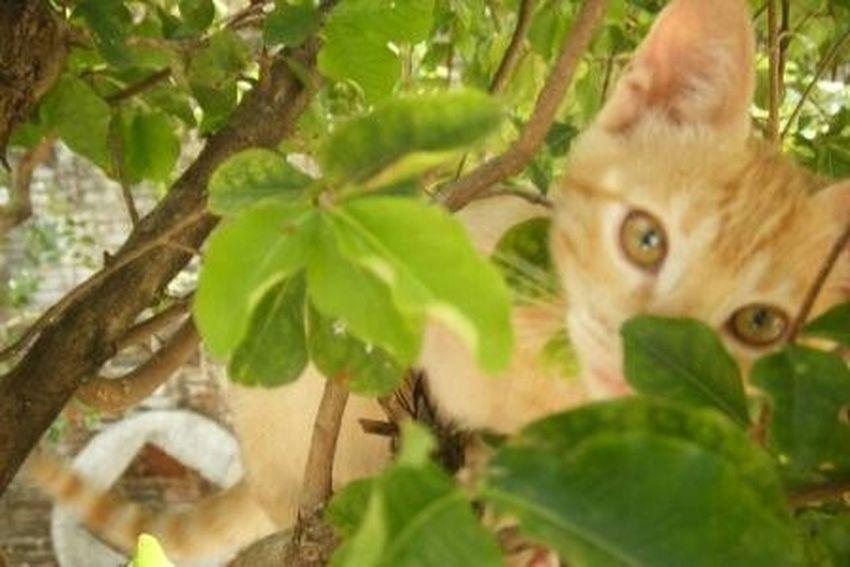 Yellow Eyes Yellowcat