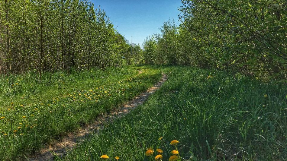 Sunny and green in True Skov Forest Forest Path True Skov Aarhus Denmark