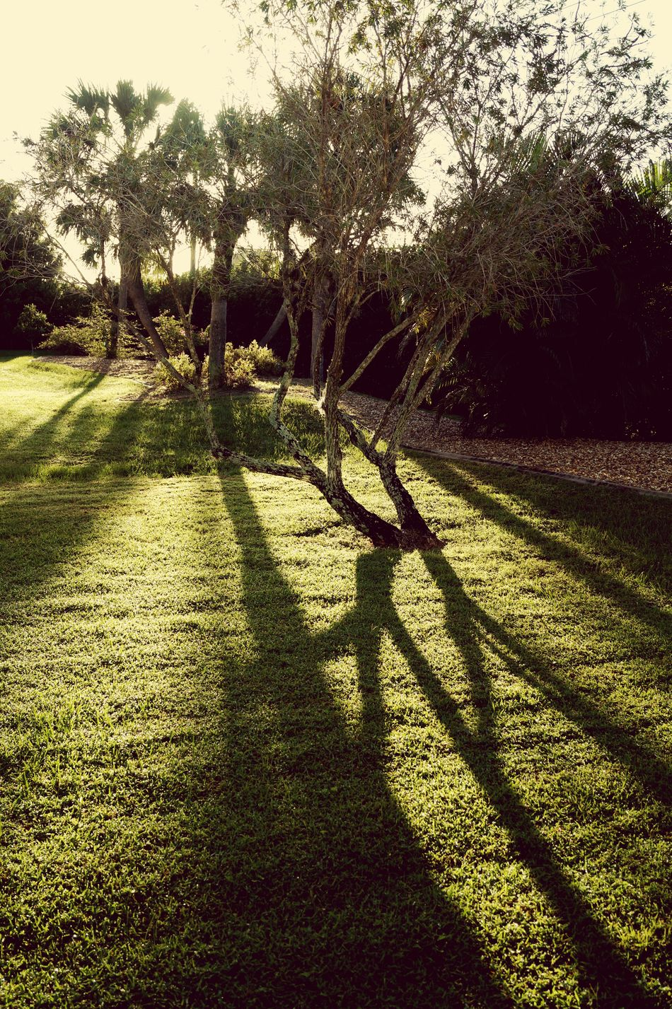 Capture The Moment Trees Shadows Sunlight Dawn Landscape Florida Morning Hanging Out
