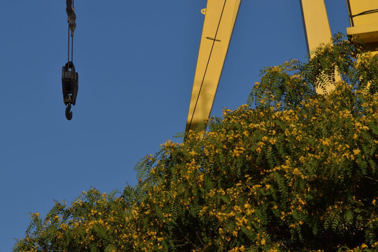 Argentina Black And Yellow  Buenos Aires Crane Nikon Nikond3300 Port Port Crane Puerto Madero Tree