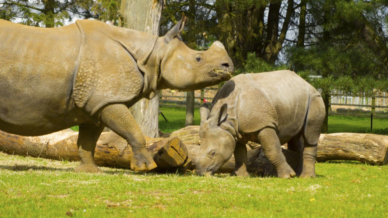 Baby Rhino Rhinoceros Rhino Nature_collection Naturelovers Nature Photography Nature One Horned Rhino One Horned Rhinoceros Motherhood The Great Outdoors - 2016 EyeEm Awards