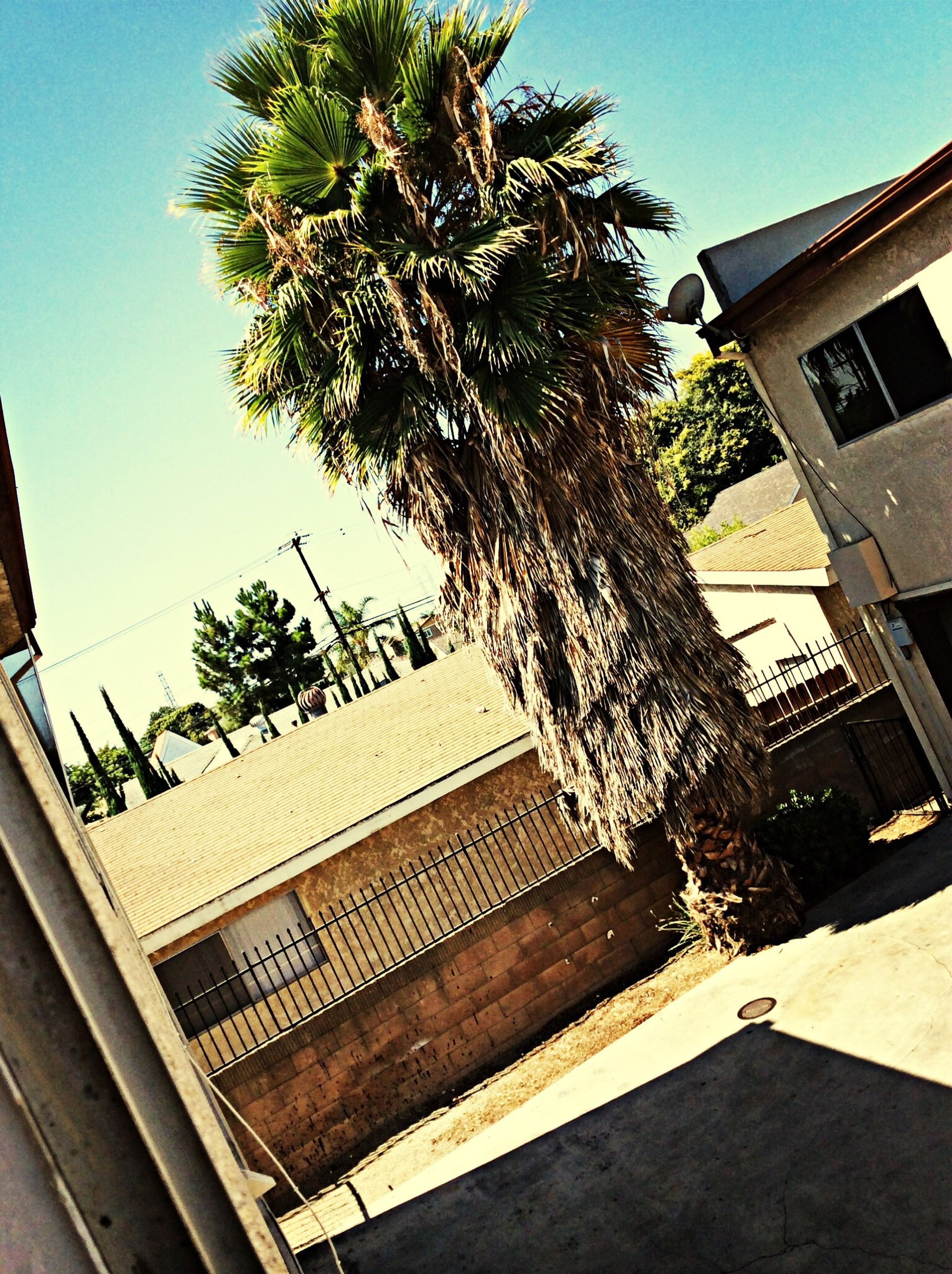 building exterior, architecture, built structure, low angle view, clear sky, tree, window, residential building, residential structure, building, house, sunlight, sky, shadow, palm tree, day, outdoors, balcony, growth, blue
