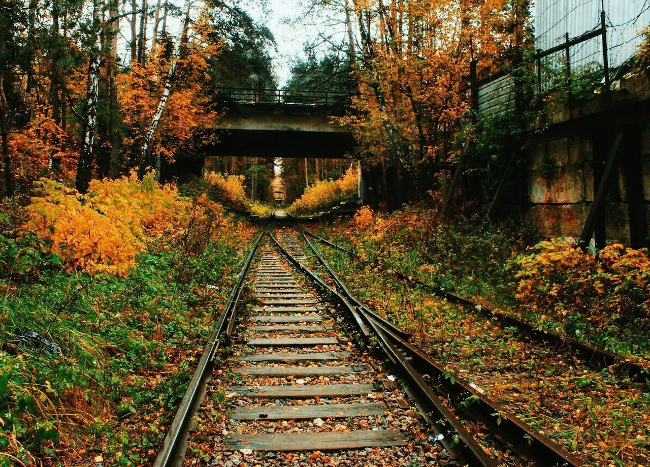 Railroad Track The Way Forward Rail Transportation Tree Growth Nature No People Outdoors Day Beauty In Nature Sky
