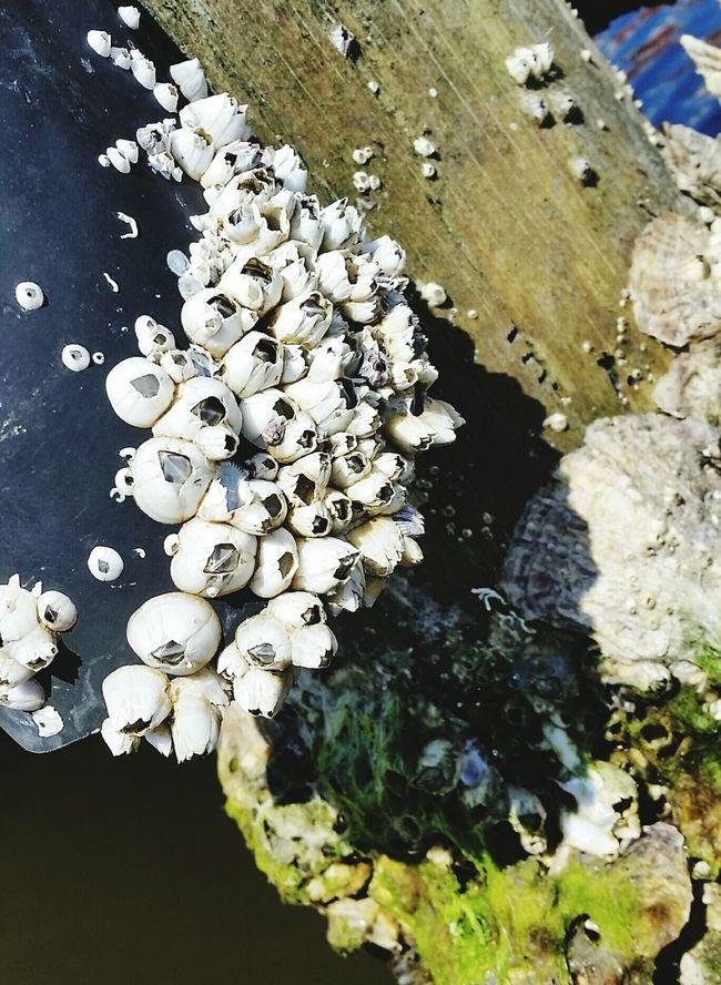 Barnacles Tiny Shells Post White Symmetry In Nature Macro_collection Vero Beach Fl Paddling Scene Florida Creek