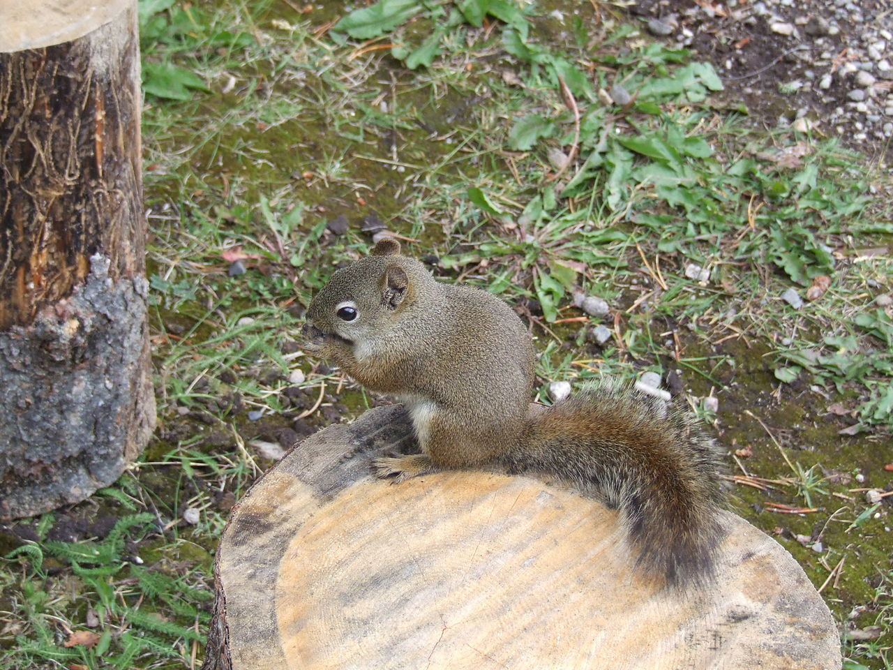 one animal, animals in the wild, squirrel, animal wildlife, nature, animal themes, mammal, day, outdoors, no people, eating, grass, close-up