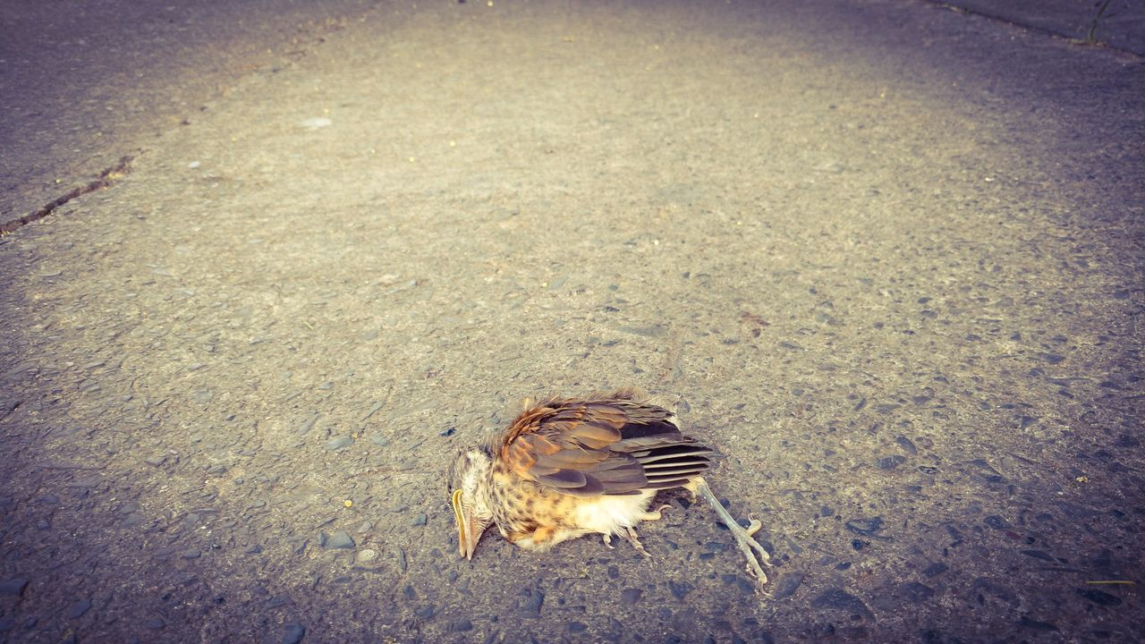 Bird One Animal Animal Themes High Angle View Animals In The Wild No People Beauty In Nature Nature Outdoors Animal Wildlife Water Beach Day Poetry Poem Death Dead Animal Deer Bird Photography Birds Birds_collection