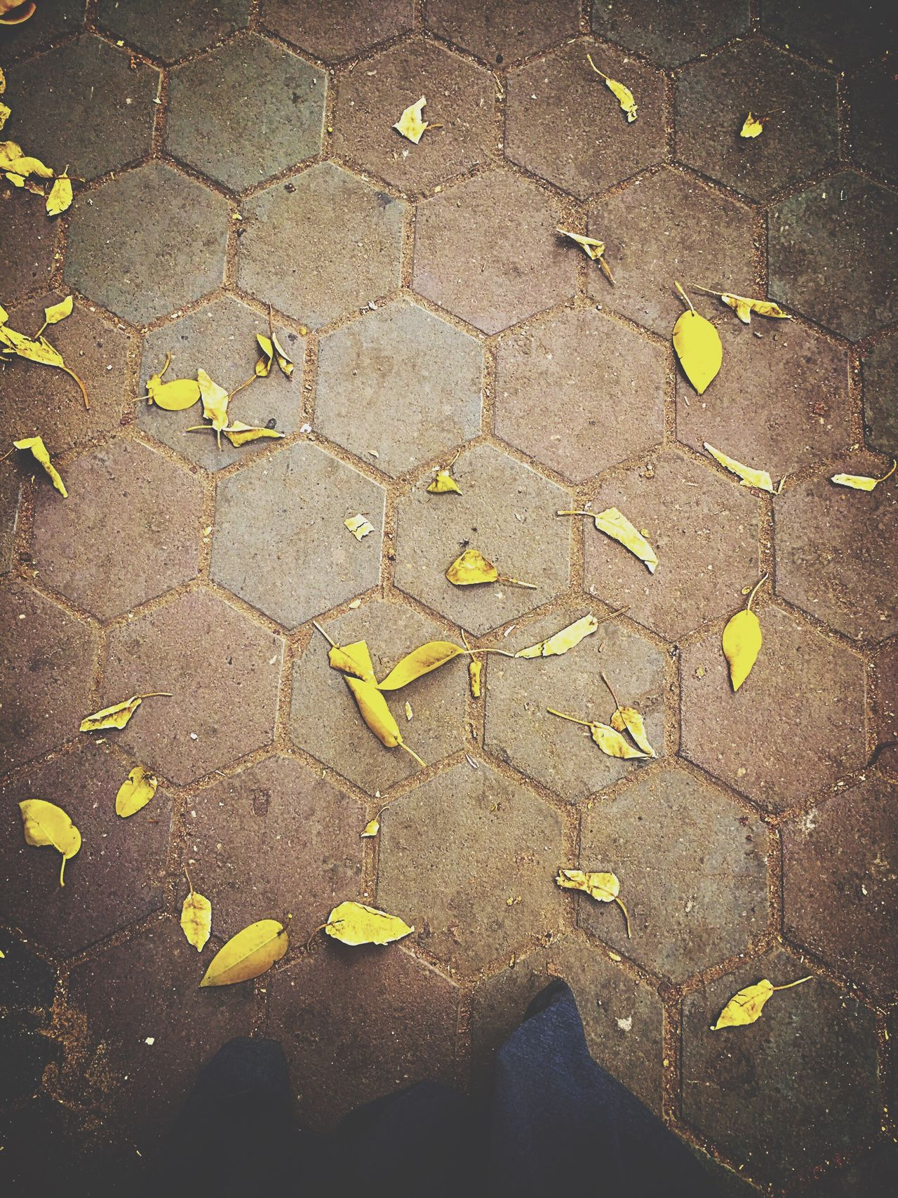 The Street Photographer - 2016 EyeEm Awards EyeEm Best Shots Leaves Leaves_collection Leaves Only Leaves Leaves On The Ground Leaves Falling Leavesfalling Leaves Are Falling Leaves 🍁 Leaf EyeEm EyeEm Nature Lover EyeEm Gallery EyeEm Best Edits EyeEmBestPics EyeEm Best Shots - Nature Eyeemphotography EyeEmbestshots EyeEmBestEdits EyeEm The Best Shots Nature Nature_collection Leaves🌿 Leaves