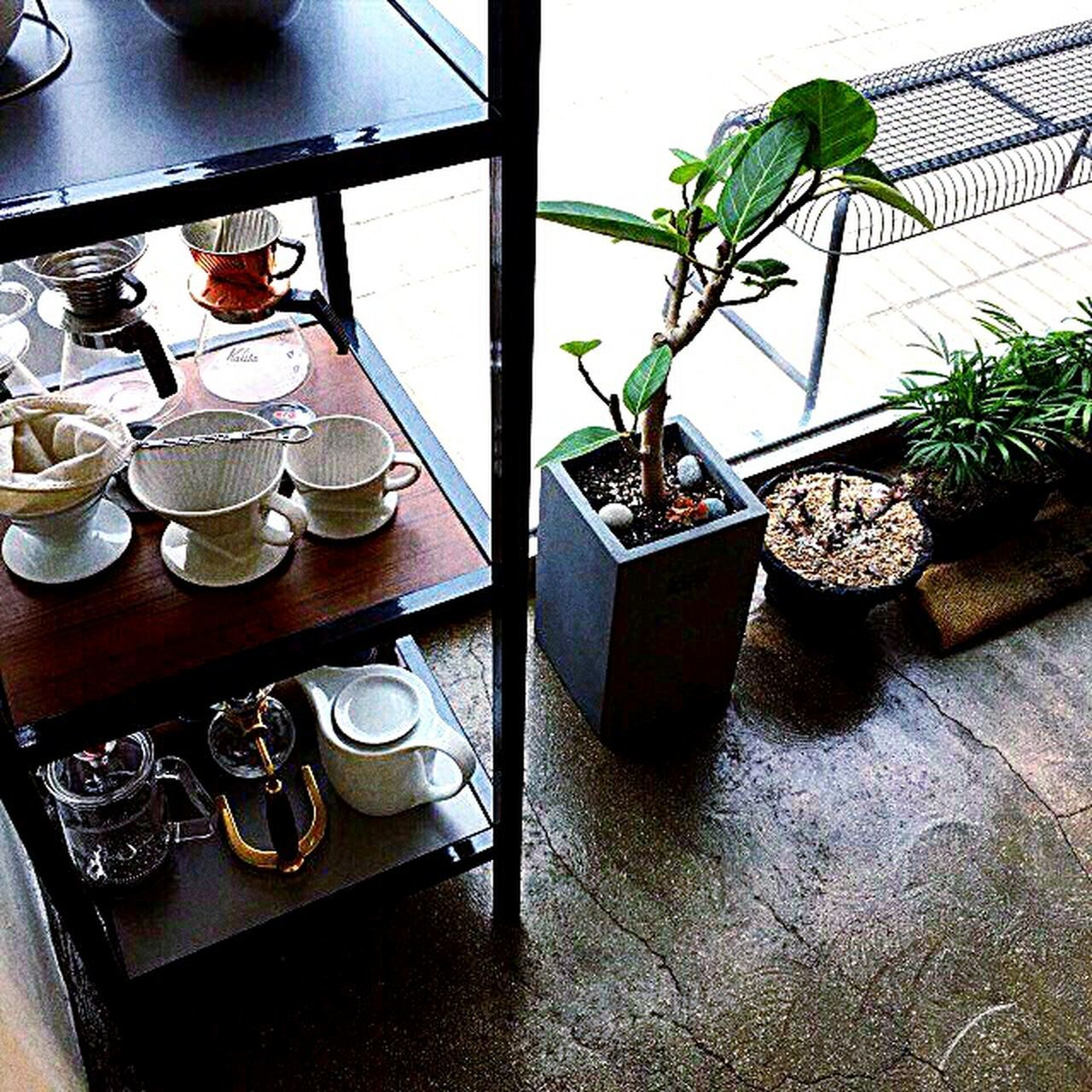 table, indoors, potted plant, no people, plant, growth, day, freshness