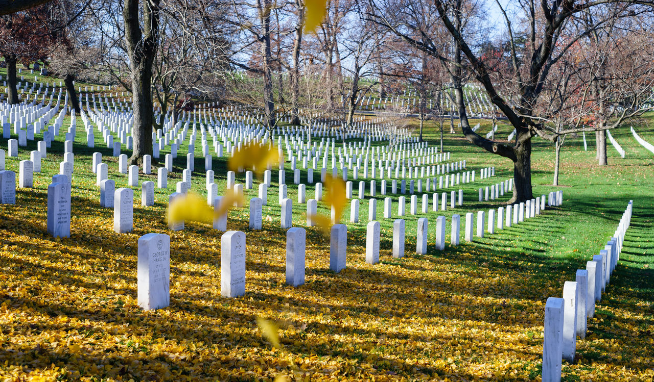 Beautiful stock photos of memorial day, Arrangement, Autumn, Branch, Cemeteries