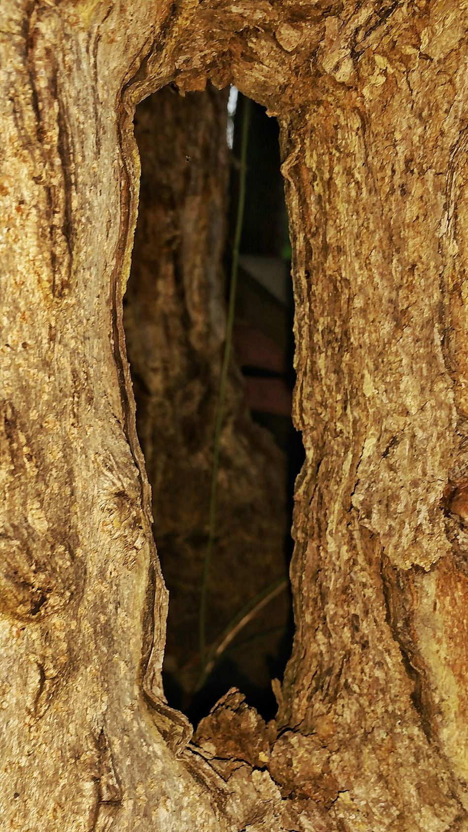 Cave Nature Close-up Travel Destinations No People Beauty In Nature Stalactite  Day Outdoors Cultures Tree Frame Shapes And Forms View Through Trees Frame Natural Frame Hole Hole In Tree Shapes In Nature  Diversity In Nature Natures Diversities TreePorn Unusal Wood Tree_collection  Tree Hole