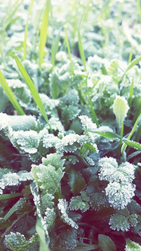 It's Cold Outside Green Grass First Frost Lazy Sunday Morning Baby Its Cold Outside ❄ I Love Winter