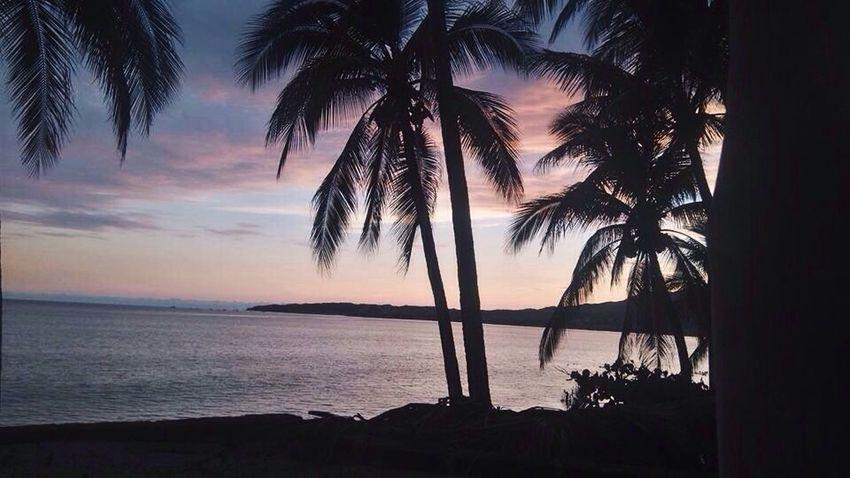 Palm Tree Sea Sunset Beauty In Nature Silhouette Beach Horizon Over Water Nature Water