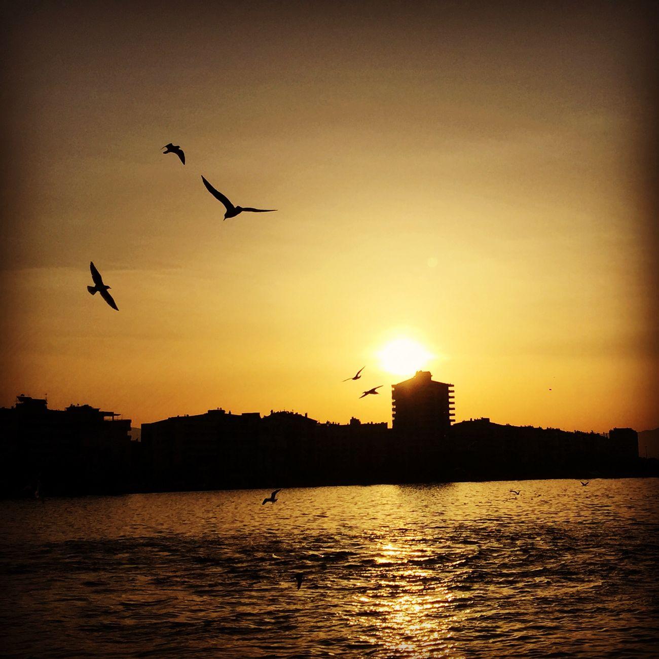Bostanlı Karşıyaka Izmir Vapur Birds Sea Sea And Sky Morning Taking Photos Photography