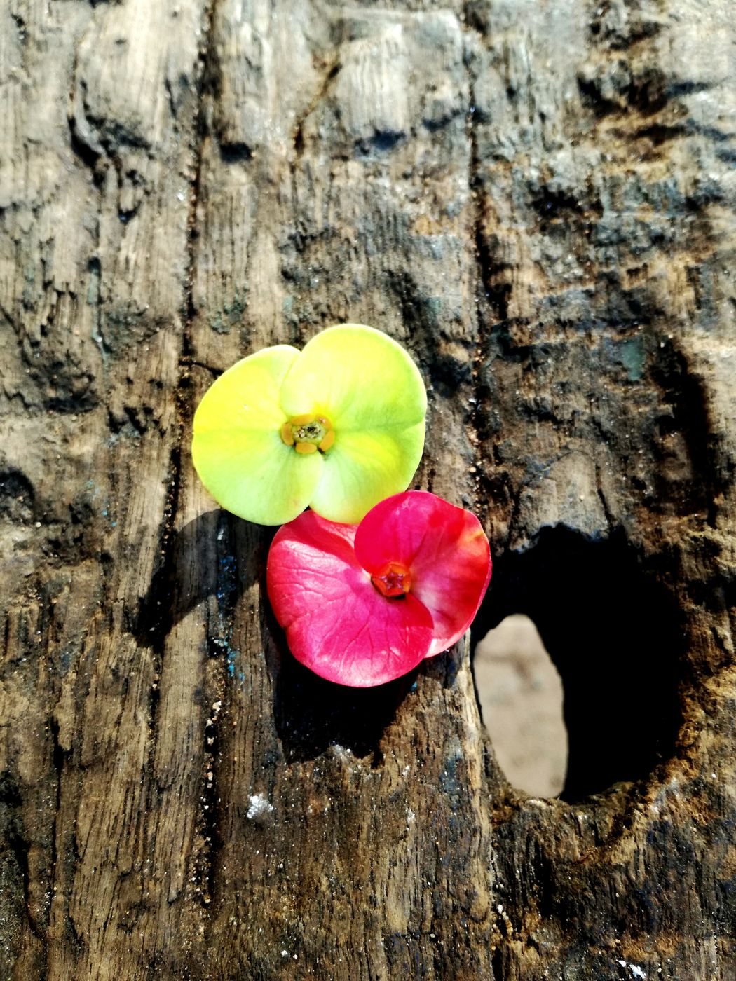 Neon Life Flower Freshness Flower Head Neon Neonpink Nature Day Sleeper Wood