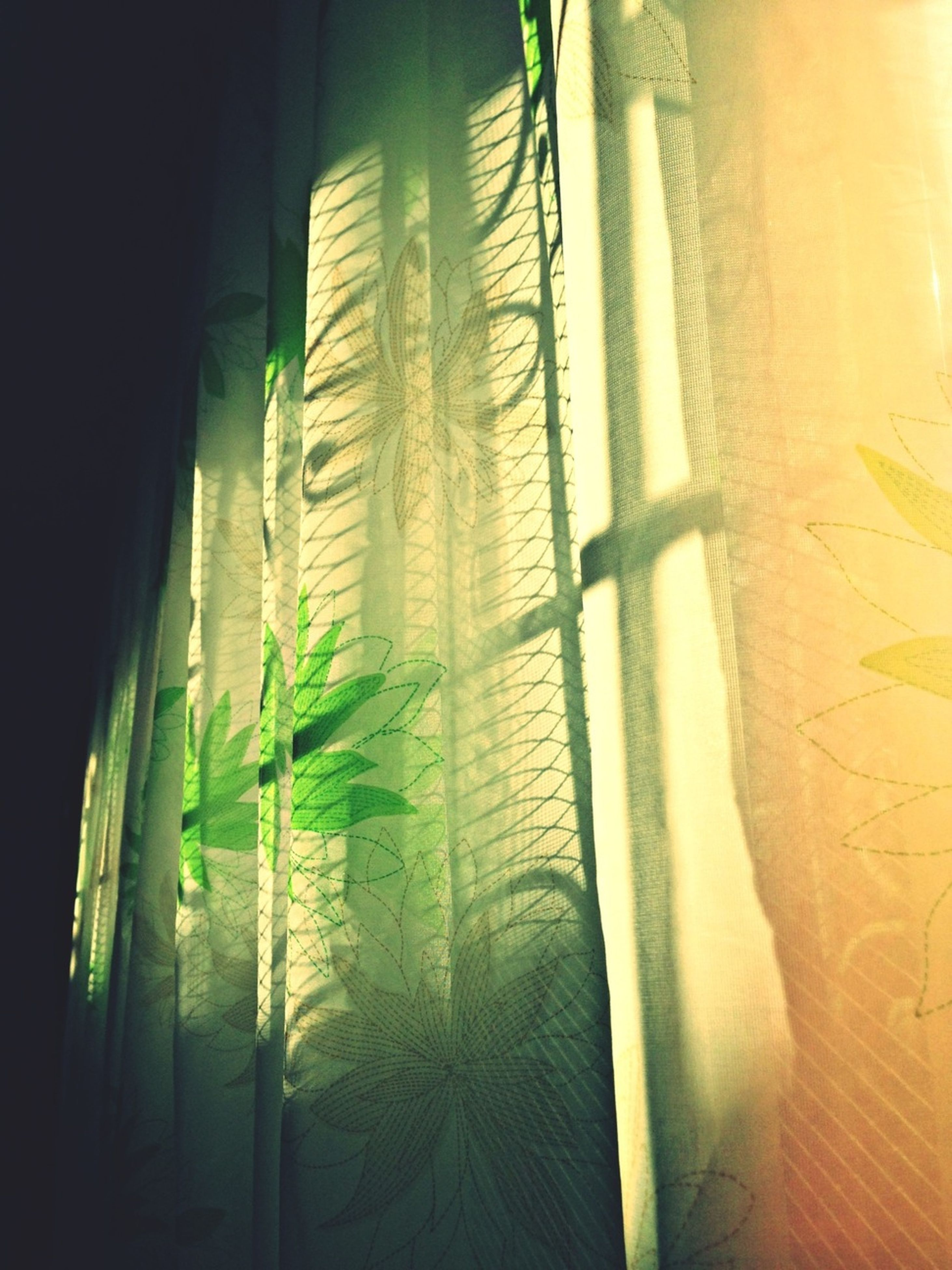 indoors, growth, curtain, window, sunlight, wall - building feature, shadow, plant, day, no people, close-up, green color, built structure, nature, home interior, wall, architecture, pattern, low angle view, glass - material
