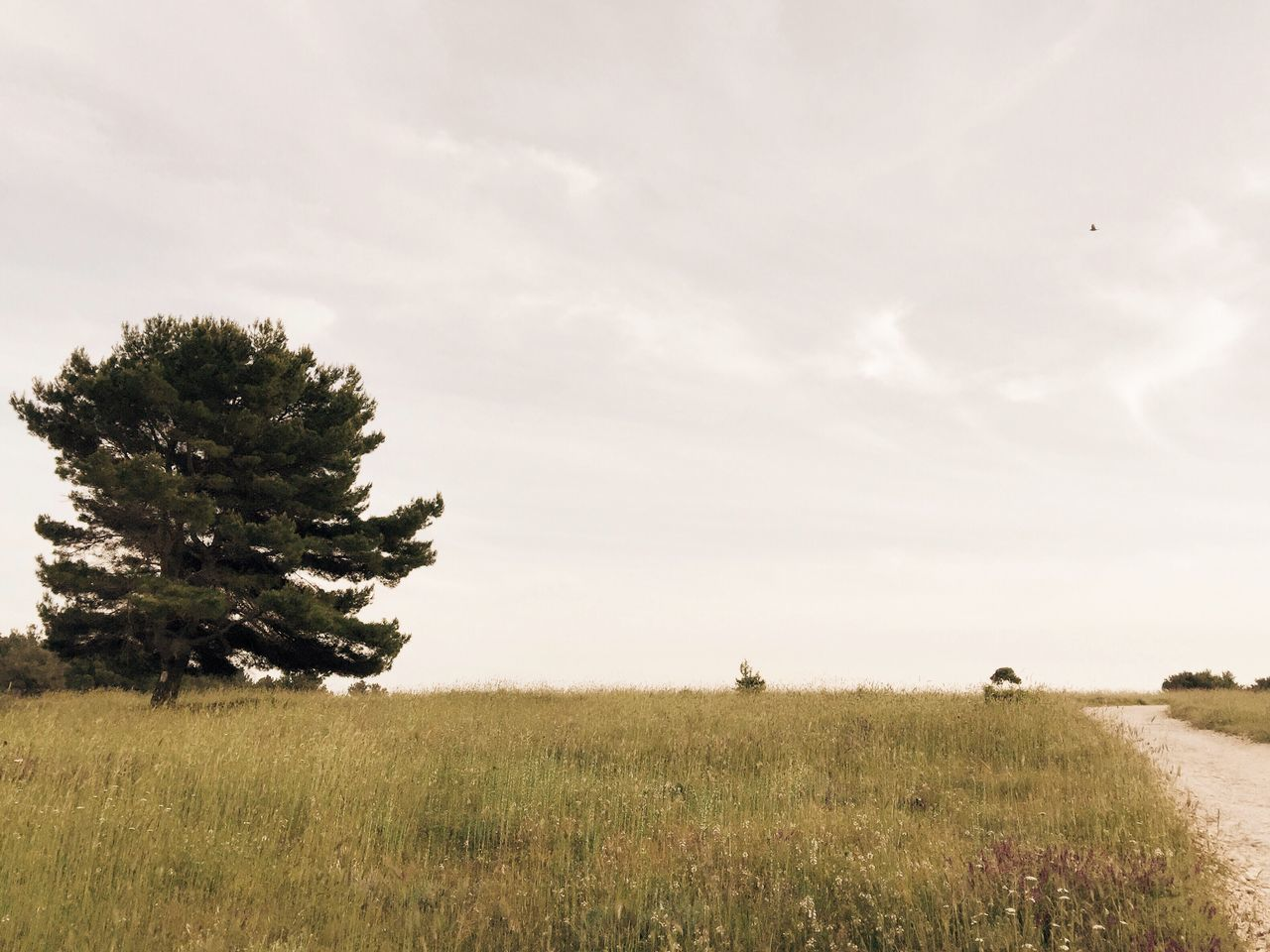 field, landscape, grass, nature, growth, tree, tranquility, tranquil scene, sky, no people, beauty in nature, scenics, day, outdoors