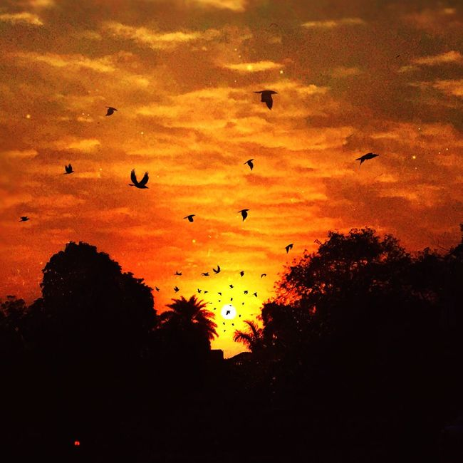 Morning sunrise Throwback Thrusday Sunrise Birds Hello World Beautiful Day Lovely Weather Sky