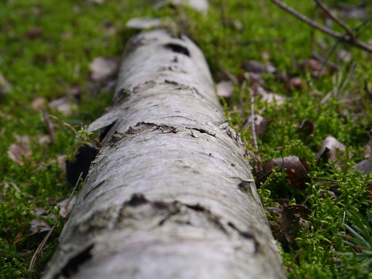 Close-up Day Deforestation Environmental Issues Fallen Tree Fossil Fuel Fuel And Power Generation Grass Log Lumber Industry Nature No People Outdoors Plant Bark Textured  Timber Tree Tree Ring Tree Trunk Wood - Material