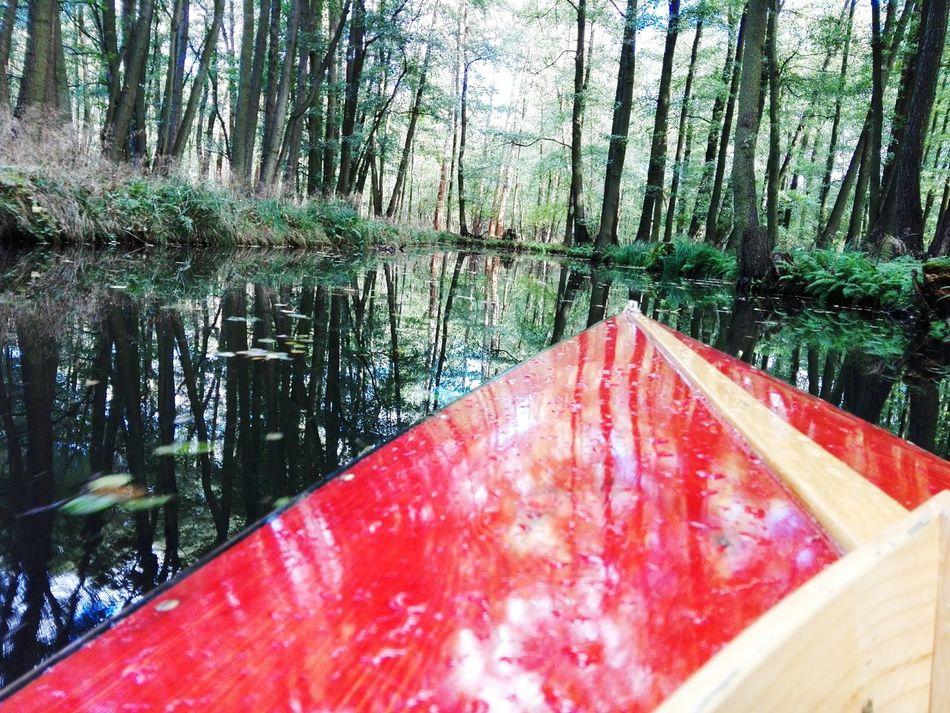 Mit nem Paddel in der hand und umgeben in Wasser. Water Nature Tree Beauty In Nature Outdoors Day Spreewald Paddeln Kanu First Eyeem Photo