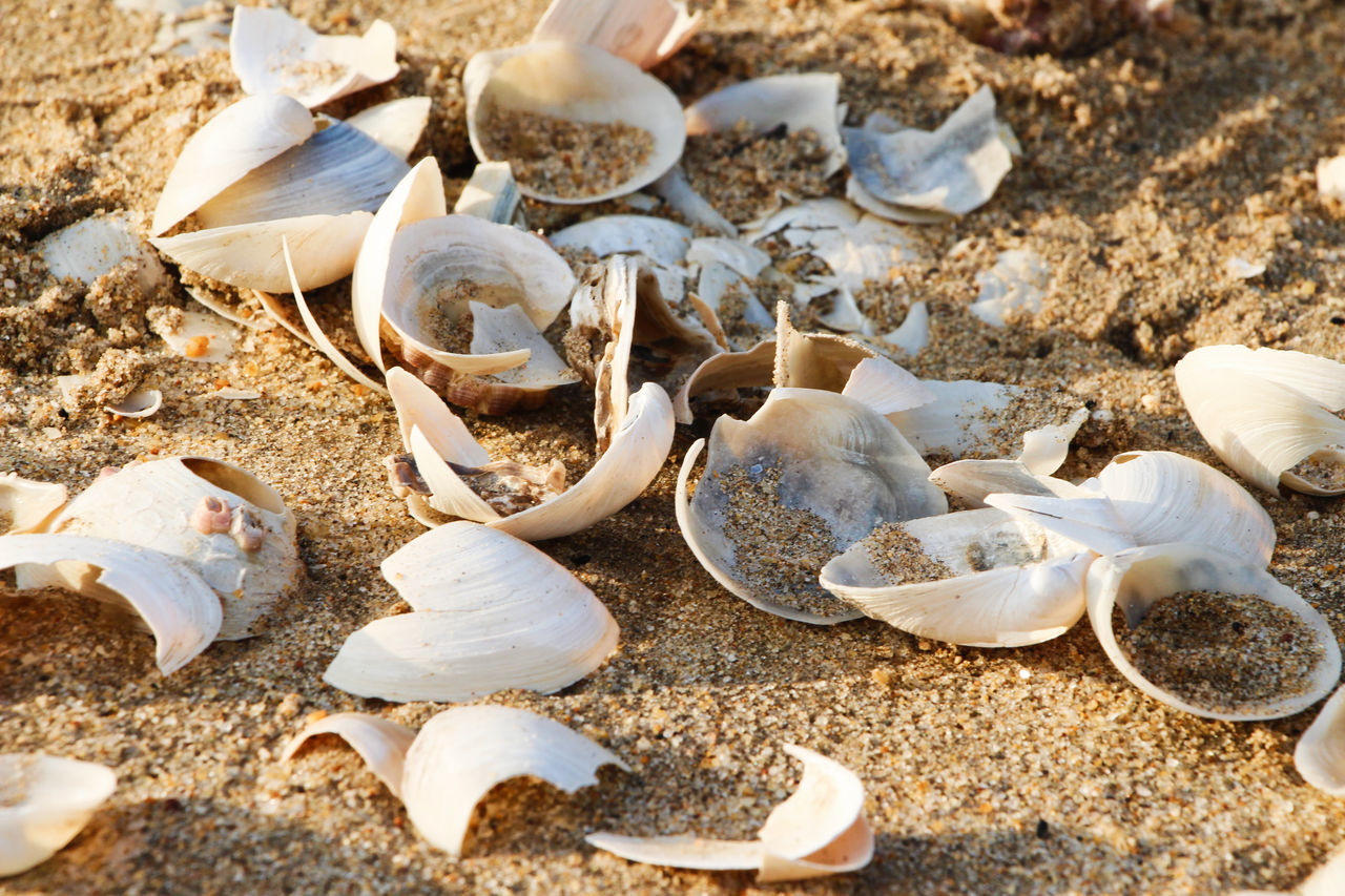 Animal Shell Beach BEIJING北京CHINA中国BEAUTY China China Photos Close-up Day Group Of Objects Large Group Of Objects Nature No People Outdoors Sand Seashell Variation Zhuhai