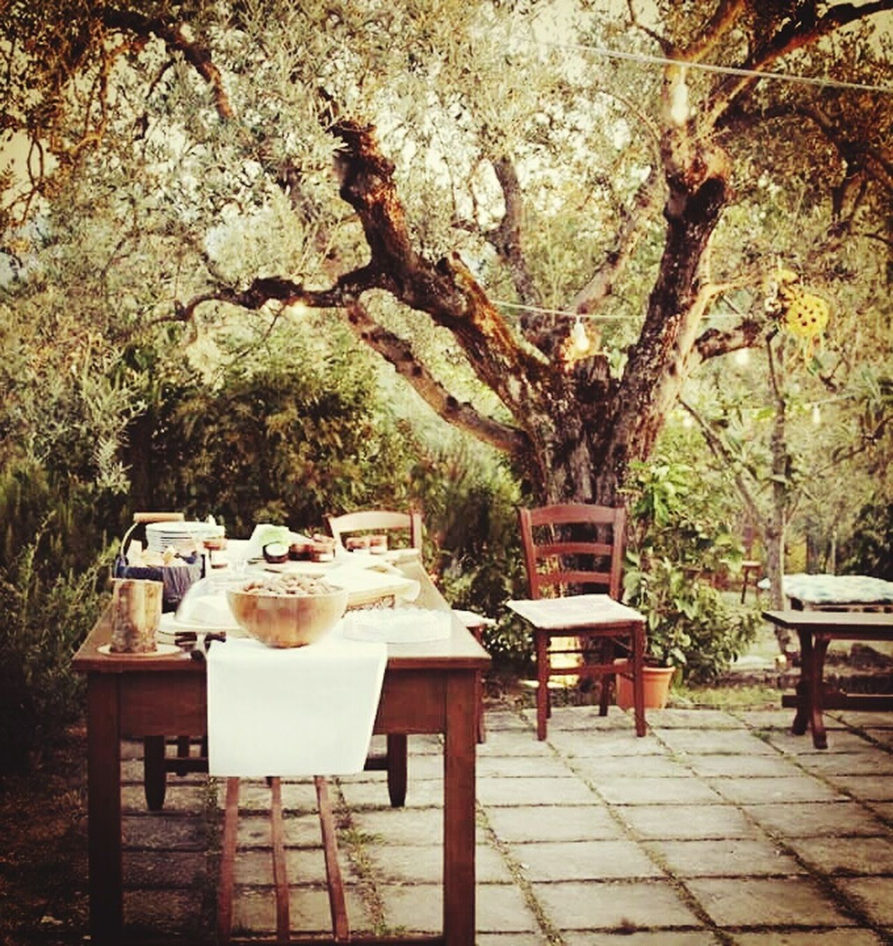 Table Tree Chair Nature Outdoors Food Countryside Countrylife