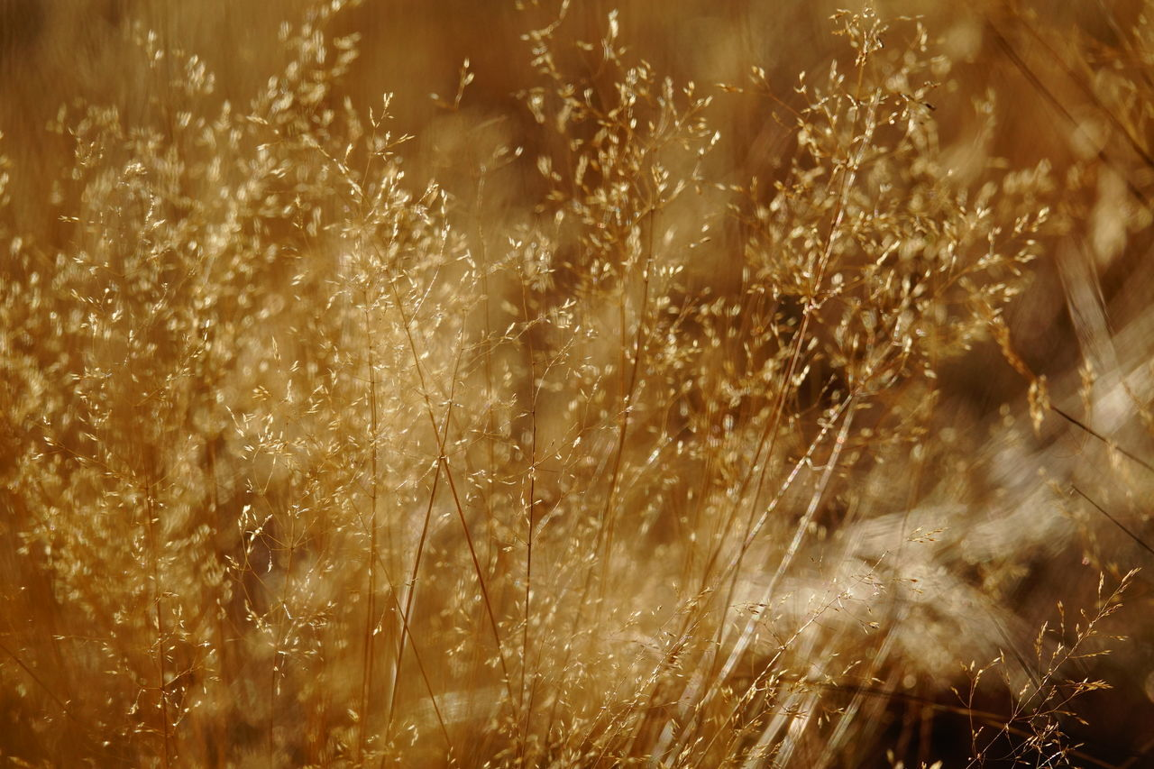 nature, grass, no people, field, beauty in nature, plant, growth, outdoors, tranquility, day, close-up, freshness