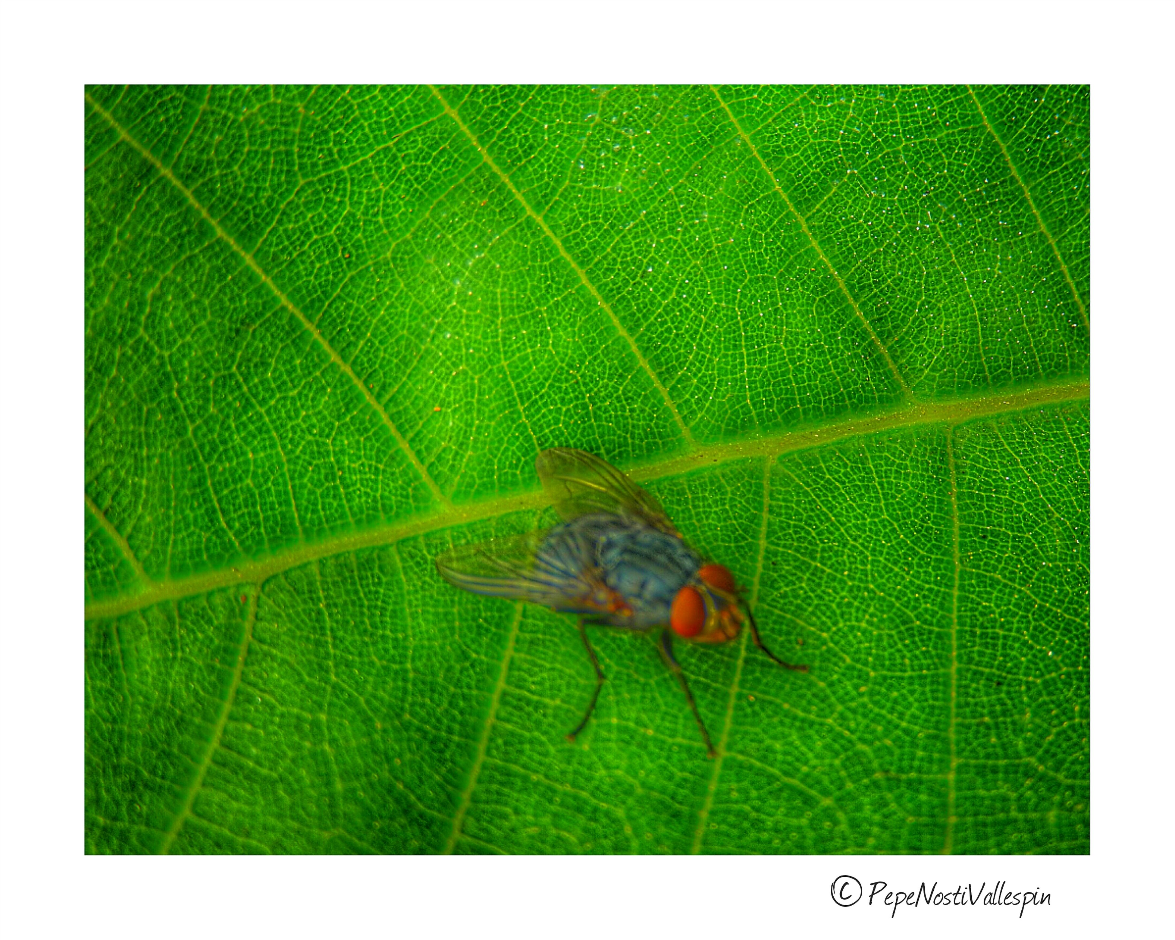 animal themes, animals in the wild, one animal, wildlife, insect, green color, leaf, close-up, focus on foreground, plant, nature, zoology, growth, fragility, no people, animal behavior