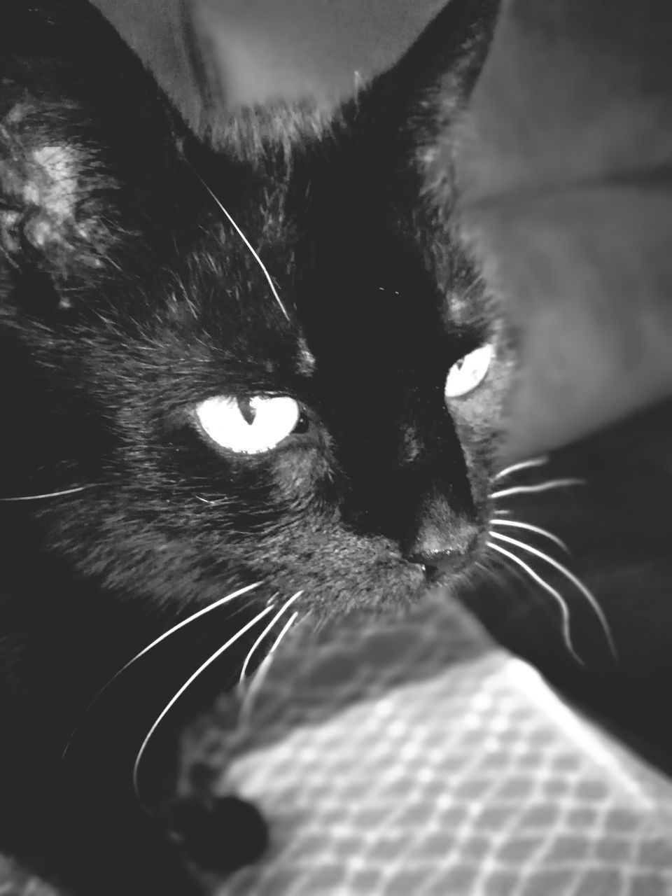 domestic cat, one animal, pets, domestic animals, animal themes, mammal, feline, whisker, indoors, animal head, close-up, no people, day
