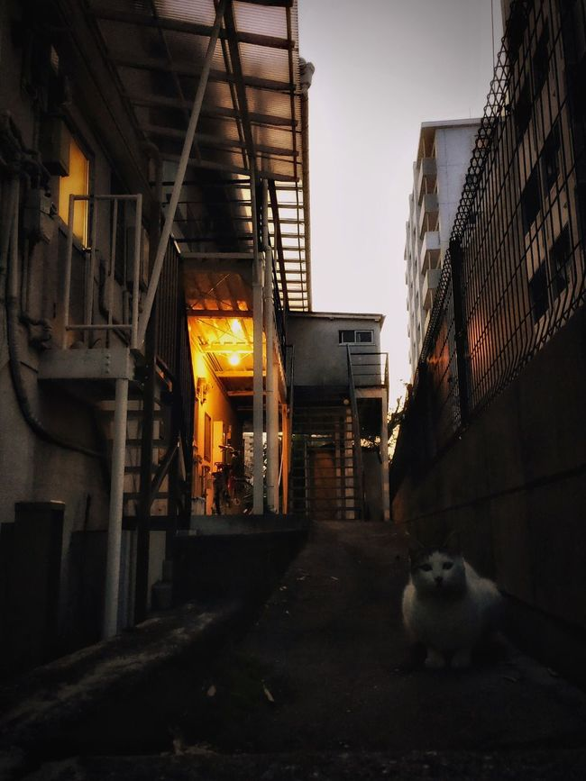 Cat Animal Streetphotography Check This Out Night Lights IPhoneography Relaxing Mood Snapshots Of Life