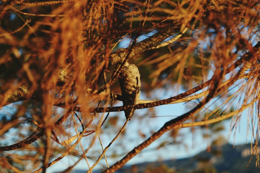 Beauty In Nature Nature Tree Focus On Foreground Alberi Alberi Spogli Sky Nature Photography Cielo Beautiful ♥ Beatiful Nature Nikonphotography EyeEm Gallery Day Vintage Photo Sardegnanatura