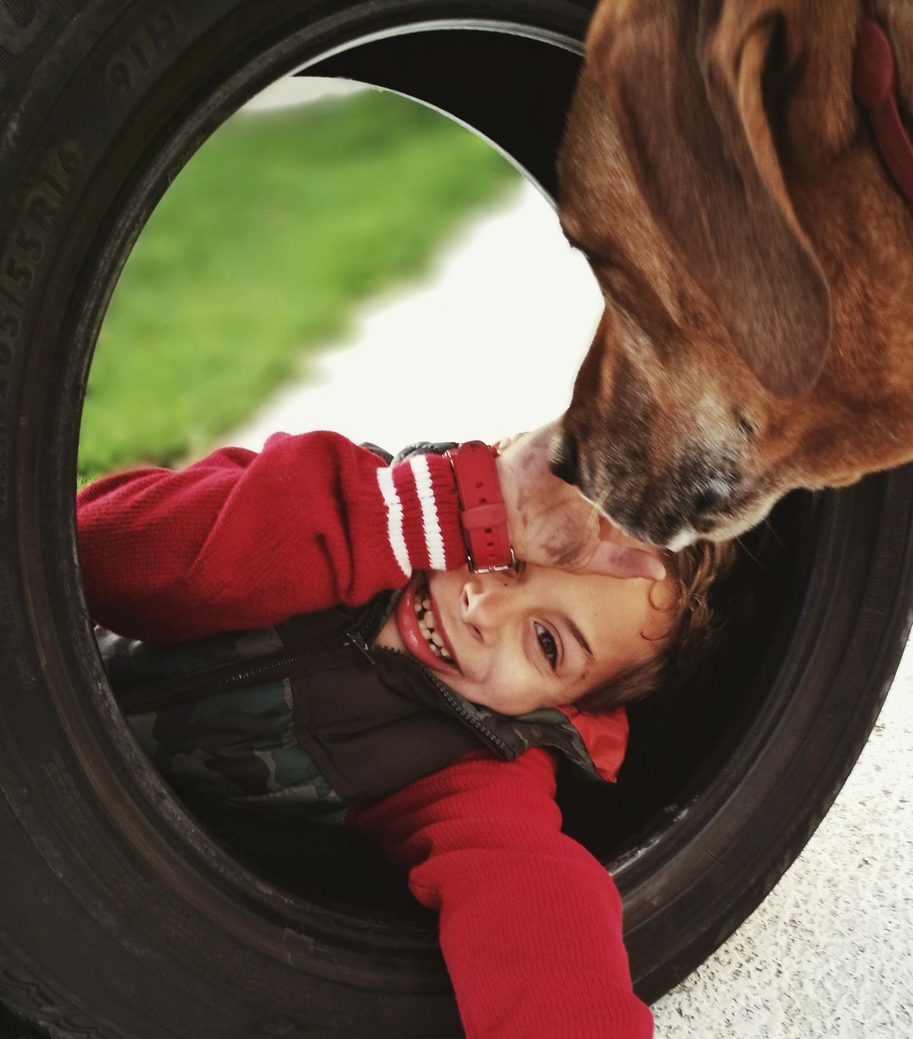 RawWorld Childhood Smiling A Dogs Life Tire Inside Things Pet Life  Outdoor Photography
